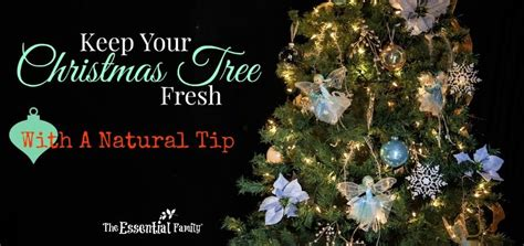how to keep a christmas tree fresh naturally the