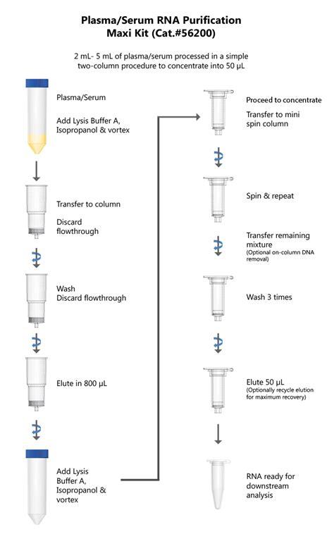 Lysis Buffer Recipe For Rna Extraction | Besto Blog