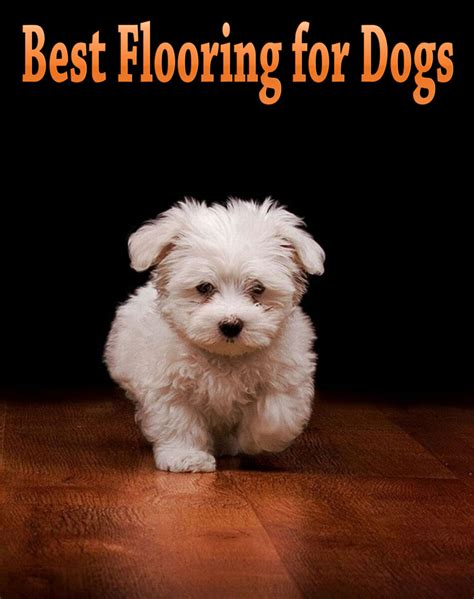 flooring for dogs best flooring for dogs corner