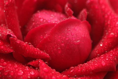 different reds color science how popular colors make us feel different