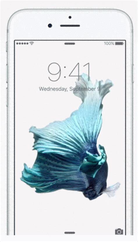 gif wallpaper iphone 6 plus silver iphone 6s blue fish wallpaper impremedia net