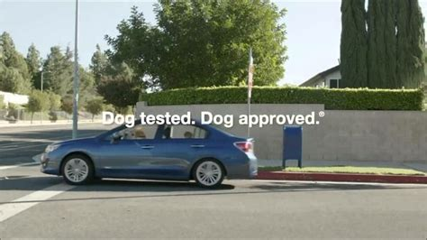 dog house commercial you tube subaru dog commercial autos post