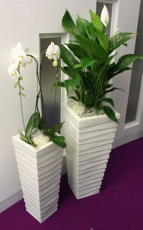 plants for office 1000 images about indoor office plants on pinterest