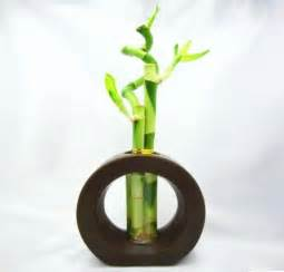 lucky bamboo plant room room decorating ideas home