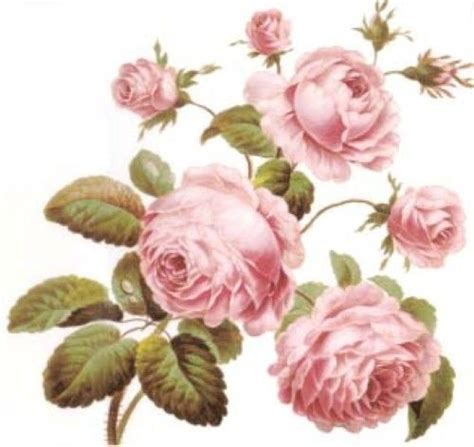 Cabbages Roses New Website by 22 Best Images About Free Paper Dolls From My Own 1000