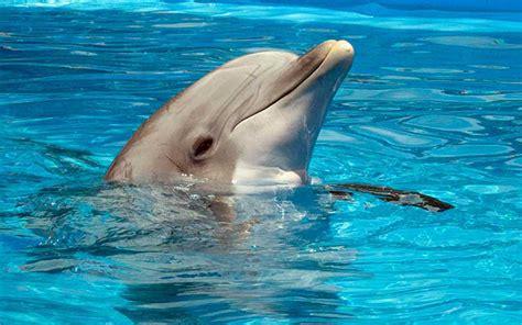 imagenes niños nadando preguntas m 225 s frecuentes sobre delfines delfines