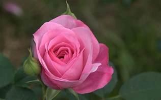 color rosa fondo rosa