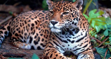 imagenes de animales nuevas especies en m 233 xico son ya 15 especies extintas en los 250 ltimos 50