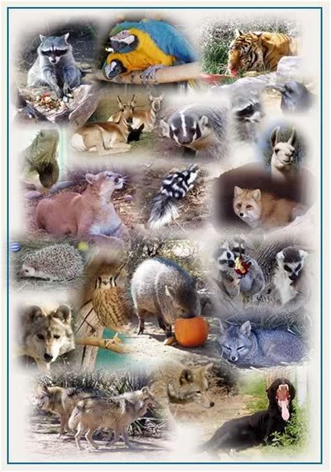 Where All The Animals by All Animals Images Awsomeness Animals Wallpaper And