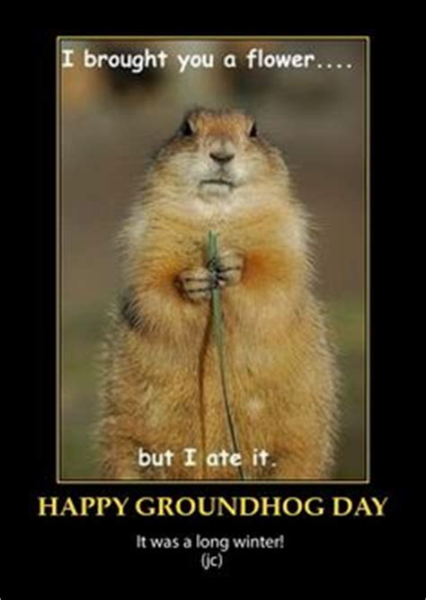 groundhog day jokes pictures 1000 images about groundhog day on groundhog
