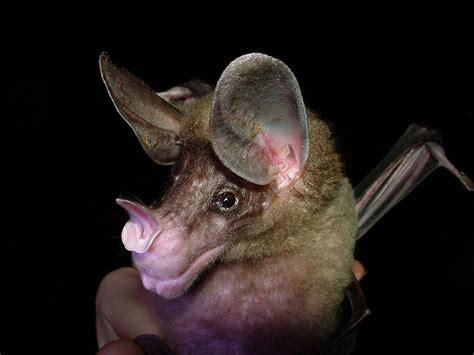 what are bats the garden of eaden