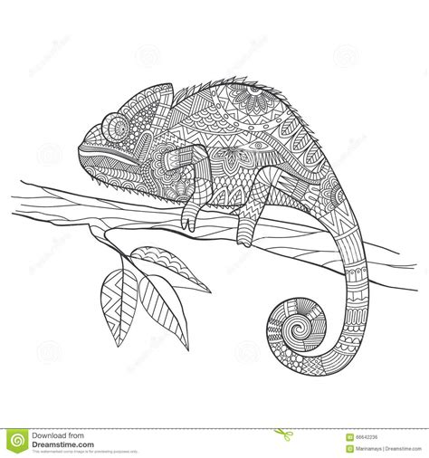 zentangle stylized chameleon lizard hand drawn vector