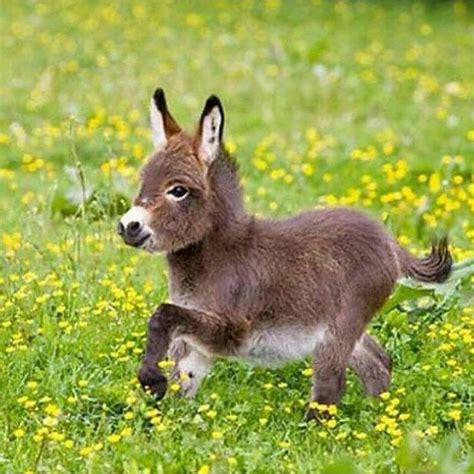 burro animal romping baby adorable animals baby