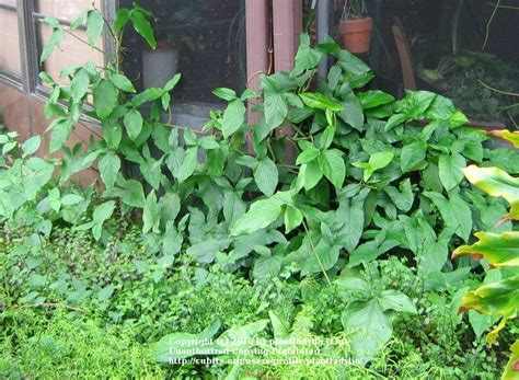 vine house plants house plants cubit house plants house plants a photo of