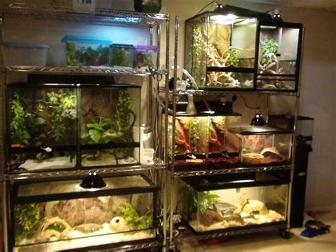 reptile rooms 17 best ideas about reptile terrarium on reptile room reptile enclosure and home lizard