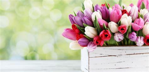 fiori recisi nomi nomi di fiori origine significato e curiosit 224