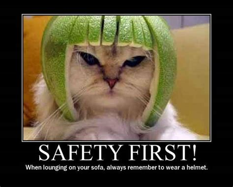 Funny Safety Memes - cat funny safety meme picture
