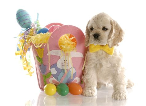 easter breaks with dogs