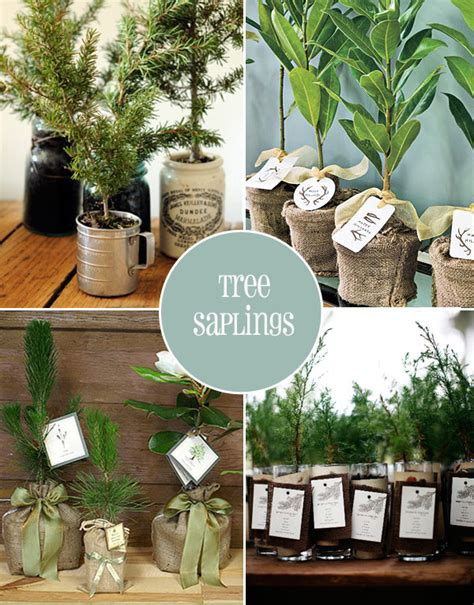 Wedding Favors Trees by Green Wedding Favour Ideas Onefabday