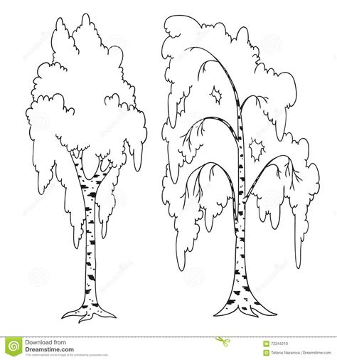 birch tree coloring page birch tree leaf template sketch coloring page