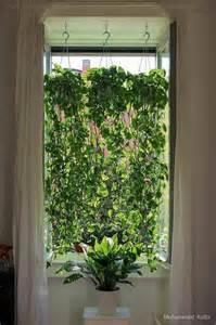 Best Kitchen Window Plants 17 Best Ideas About Pothos Plant On Kitchen