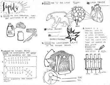 carbohydrates notes pdf biomolecules lipids coloring sheet by scientifically
