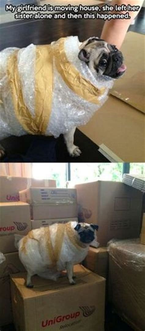 dog suddenly wants to be alone 1000 images about packing memes on pinterest boxes how