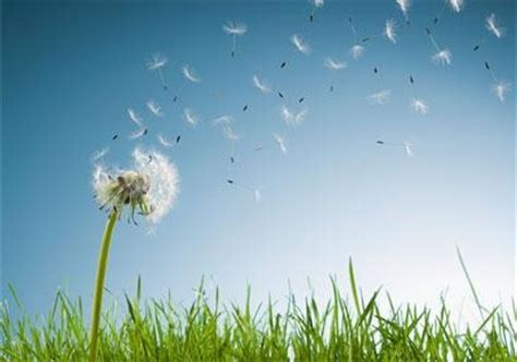 how to help allergies 15 tips to help you deal with seasonal allergies after teotwawki