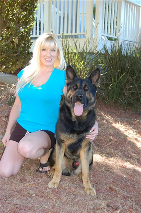 personal protection dogs personal protection dogs for sale from ccpd