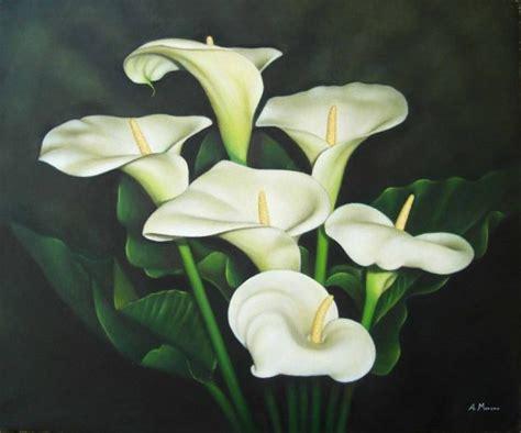 imagenes de flores calas nuevo amanecer calas