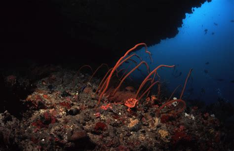 whip coral christmas tree rock noonu atoll maldives