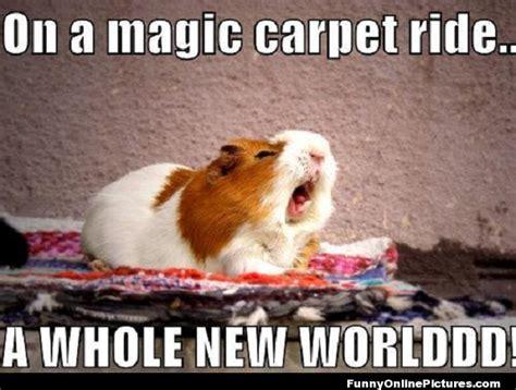 Guinea Pig Meme - funny hamster memes memes