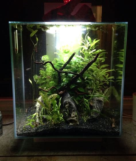 aquascape tank for sale 46 best images about aquascape fluval edge 46 on pinterest