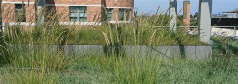 liveroof green roof systems liveroof hybrid green roofs why choose liveroof