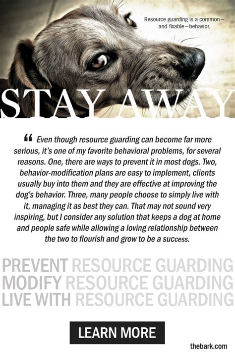 puppy resource guarding resource guarding in dogs solving this troubling problem the bark
