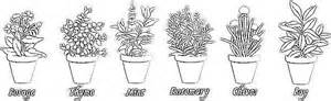 herbs coloring pages italophile coloring pages herbs