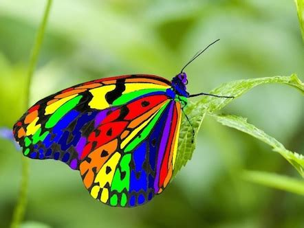 Wdd Tunik Kupu Kupu Putih gambar kupu kupu cantik terbaru gambarcoloring