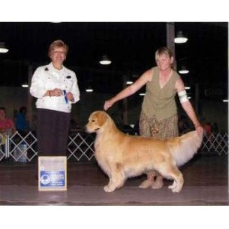 golden retriever breeders in nh granite gold goldens golden retriever breeder in sutton new hshire