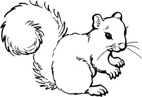 imagenes del otoño en caricatura dibujos de ardillas para colorear y pintar