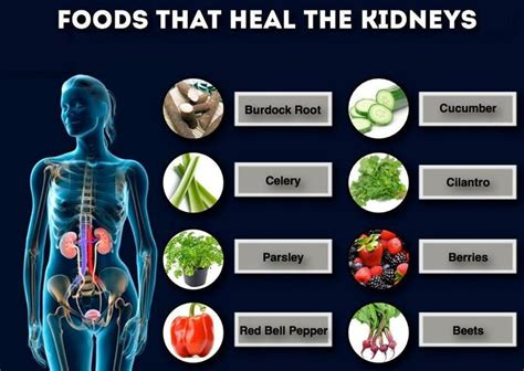 Foods To Help Detox Kidneys by 151 Best Images About Hello Kidneys On