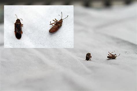 käfer im bett k 252 che 187 kleine braune k 228 fer k 252 che tausende bilder