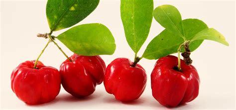 acerola propriet 224 e benefici frutto ricco di vitamina c
