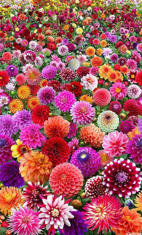 pretty garden flowers 25 melhores ideias de flores no