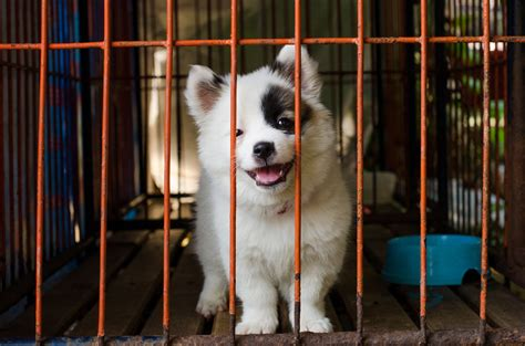 animal shelter puppies u s city now legally requires pet stores to only sell rescue animals