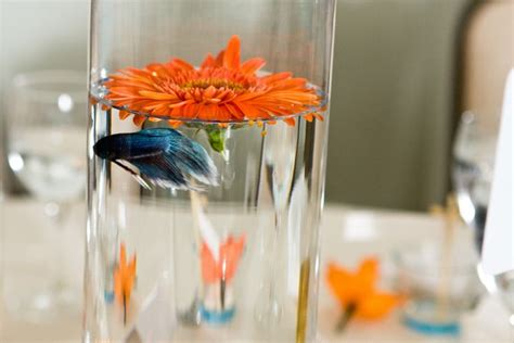 live centerpieces table live fish wedding reception centerpieces would be neat