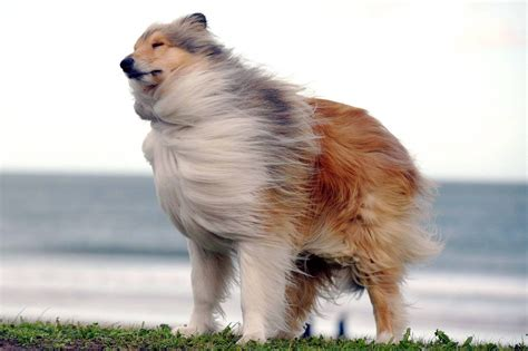 dogs in the news pictures of dogs being blown in the wind by doris metro news