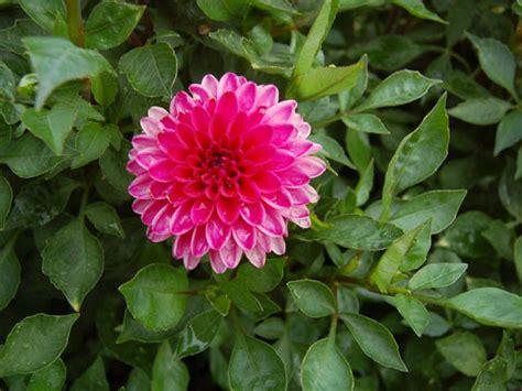 Garten Pflanzen Sommer by Sommerpflanzen Obi