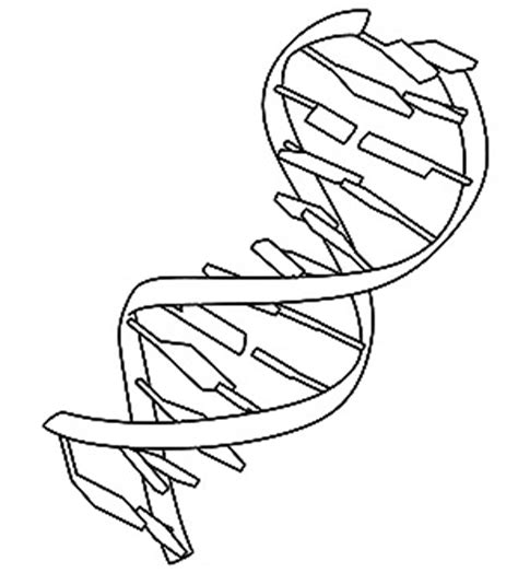 chromosome page coloring pages