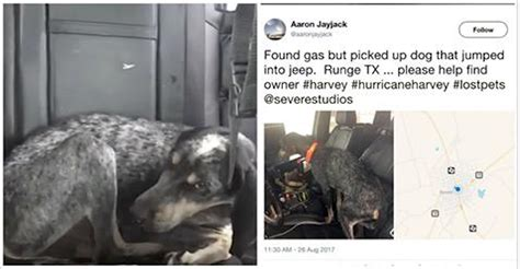 hurricane harvey dogs scared keeps following during hurricane harvey so he posts message for