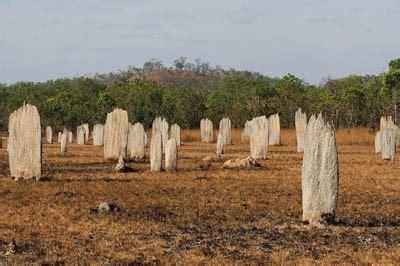 termite mound magnetic alignment